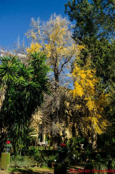 Ginkgo Biloba en el jardin botánico granada